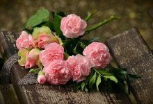 Gambar mawar merah muda