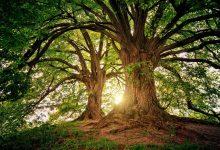 gambar pohon
