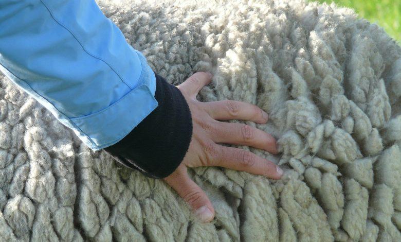 bulu kulit domba